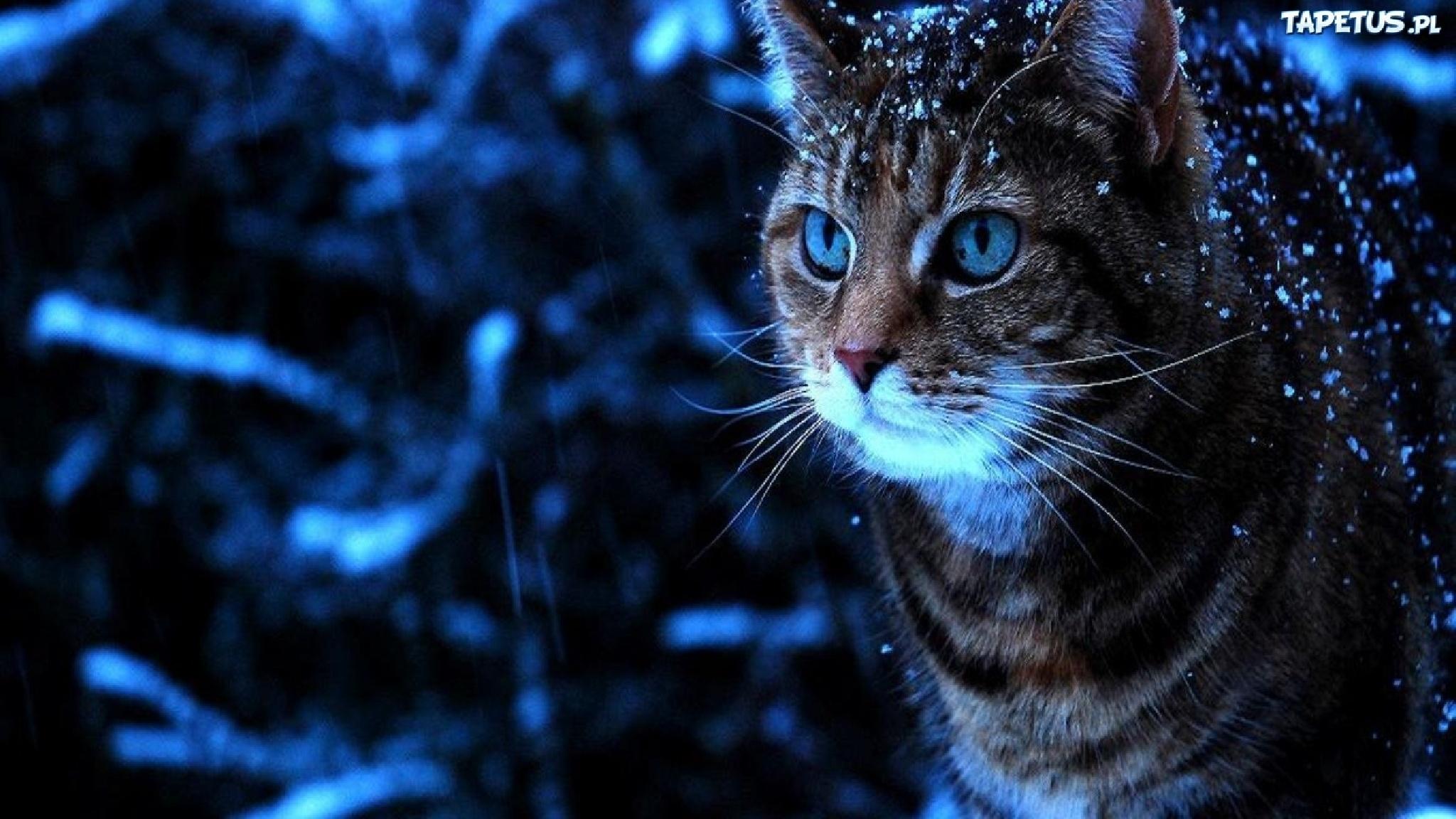Kot Oczy