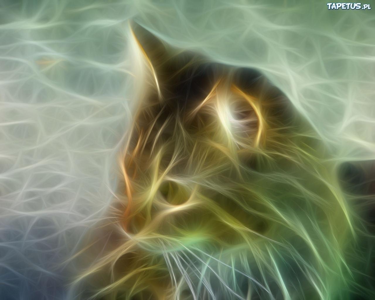 Kot Wąsy