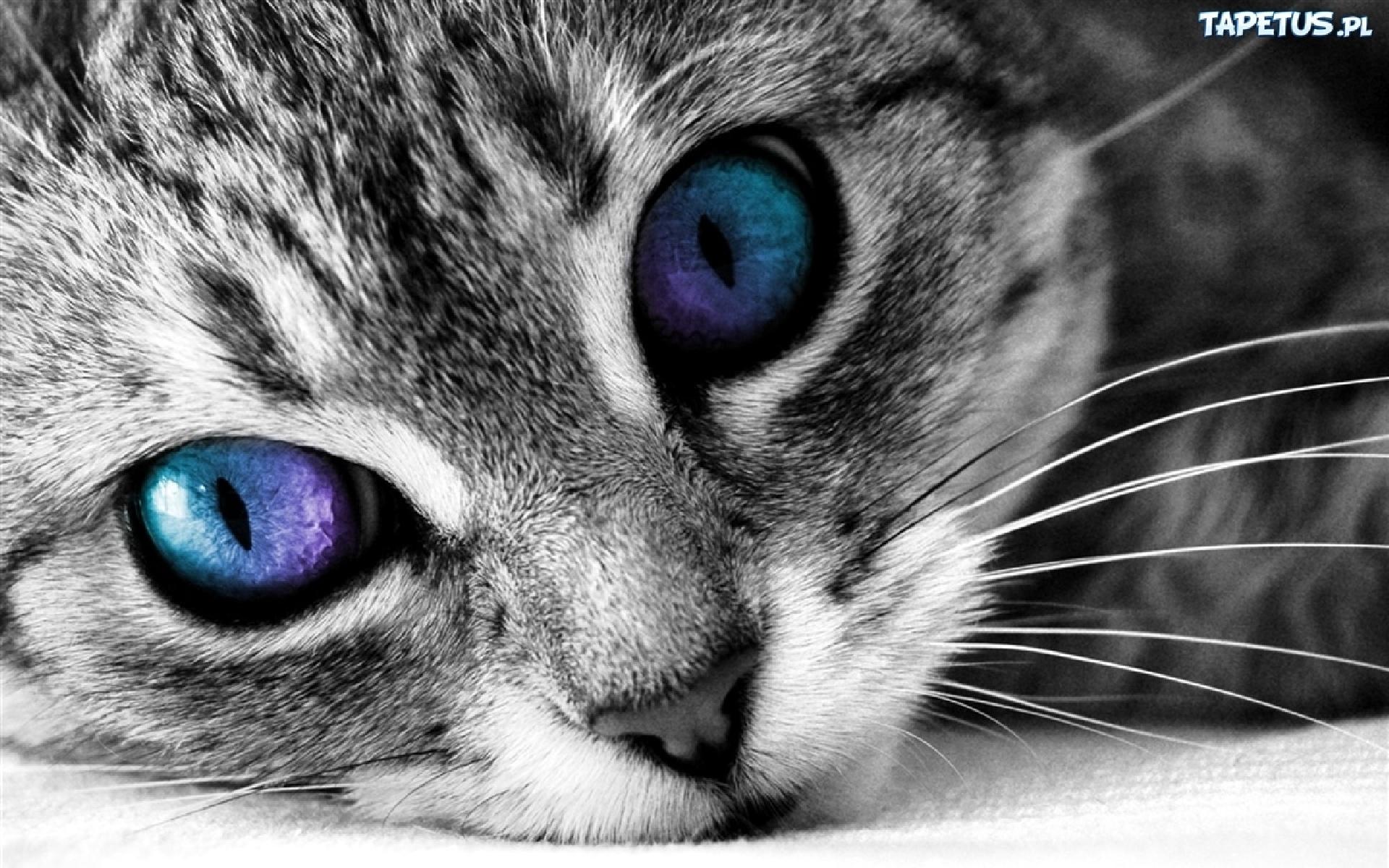 Kot Kolorowe Oczy